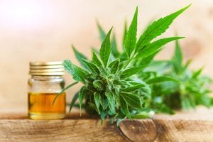 Cannabis plant and jar in background
