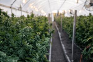 grow house for hemp