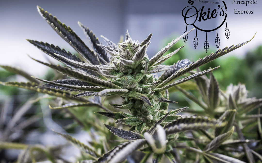 Selecting the Right Grower for your Dispensary in Oklahoma