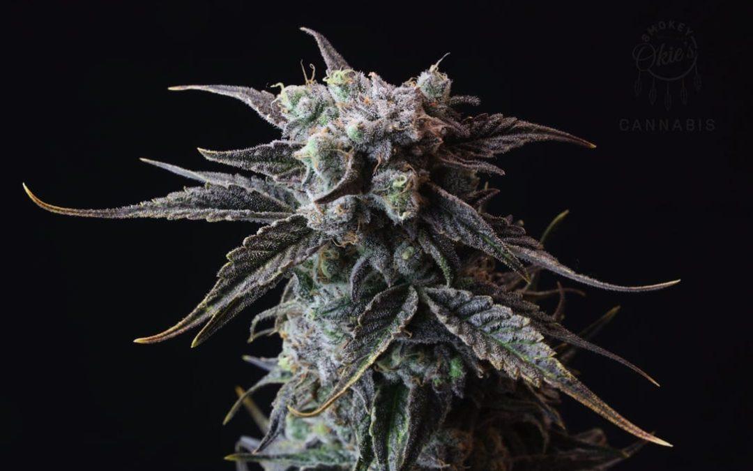 Understanding the Flowering period of Cannabis
