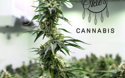 Marijuana Strain Profile: Prayer Pupil
